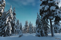 LAN_20150110_9100_1.JPG - Winter, Finnland